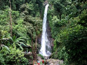 Forest Or Waterfall - Bali Sightseeing Tour