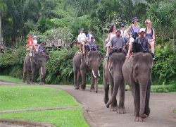RAFTING&ELEPHANTPARKVISITExtraValuePackage